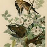 Fågelhonor har andra prioriteringar