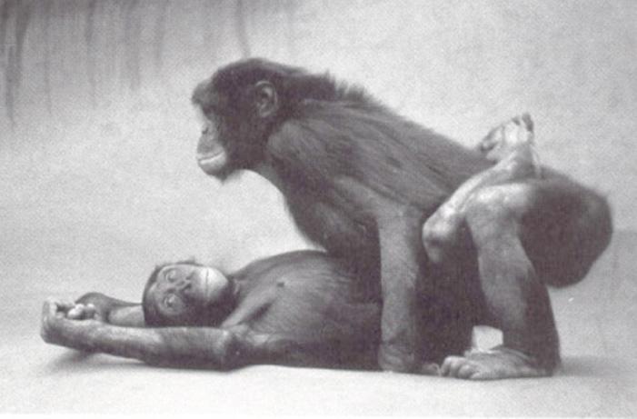 bonobo11