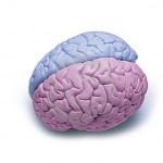 Betydelsefulla kunskaper eller neurosexism?