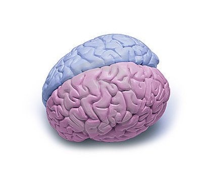 boy-and-girl-brains1